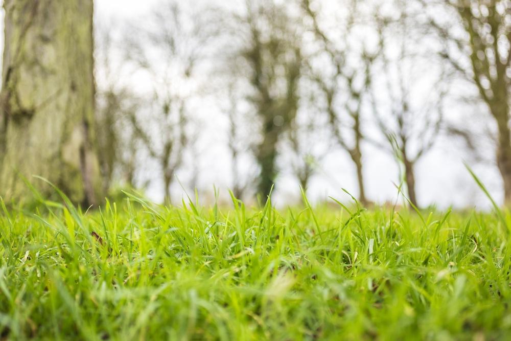 Macro view of fresh grass stems.jpeg